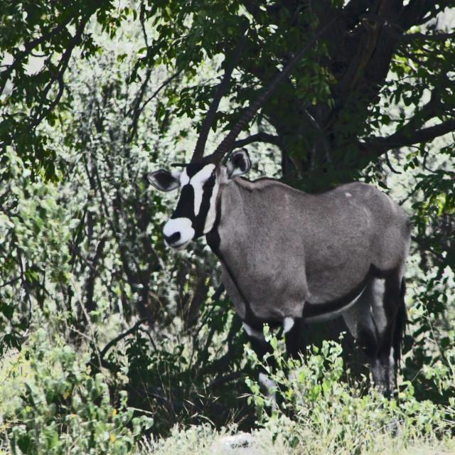 """""""Namibia"""" stock image"""