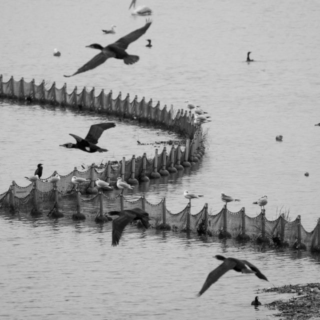 """Dynamic wild-life near the fishing net fence"" stock image"