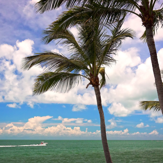 """""""Turquoise Ocean and Palm Trees in the Florida Keys"""" stock image"""