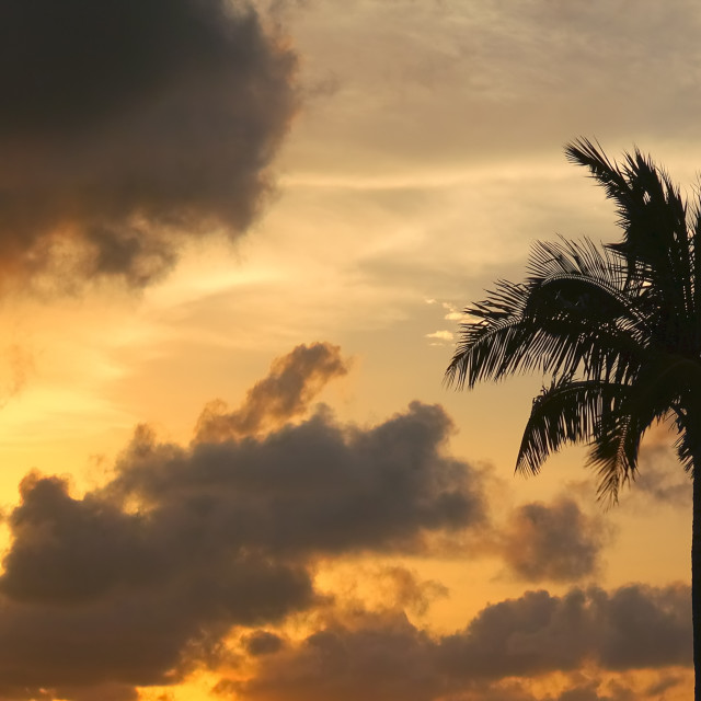 """""""Silhouette of Palm Tree Blowing in Wind Against Dramatic Sunset Sky - Key..."""" stock image"""