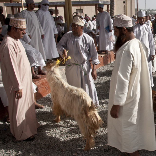 """Omani goat traders"" stock image"
