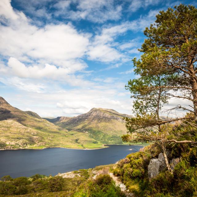 """solitary tree overlooking Loch Maree, Weste Ross, Scotland"" stock image"