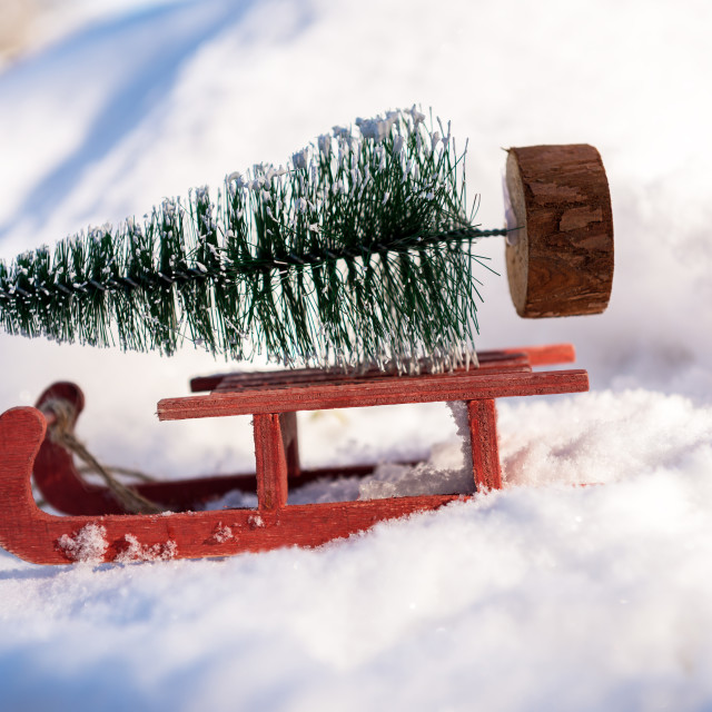 """""""Red sleigh carrying a small Christmas tree."""" stock image"""