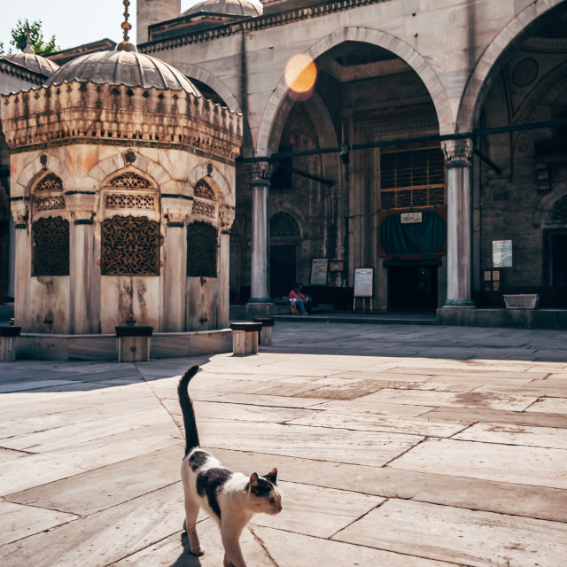 """Street Cat Hovering in Mihrimah Sultan Mosque"" stock image"