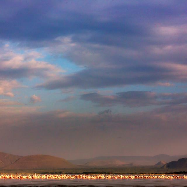 """""""Flamingos on Lake Elementaita"""" stock image"""