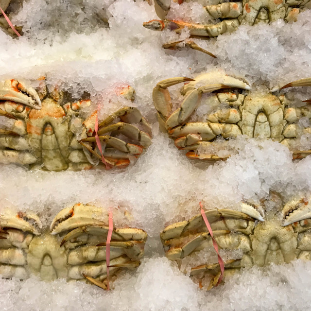 """Fresh crabs on ice in Pike Place Market, Seattle."" stock image"