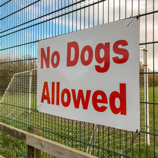 """""""Large """"No dogs allowed"""" sign on the fence of the football field"""" stock image"""