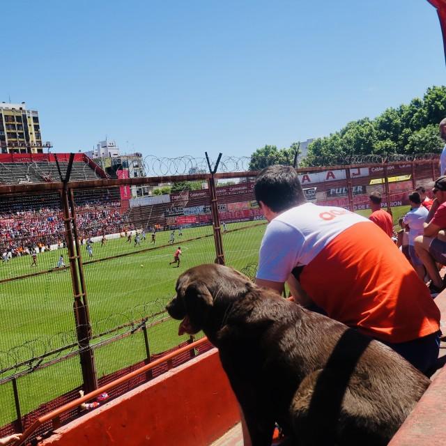"""Dog watching football"" stock image"