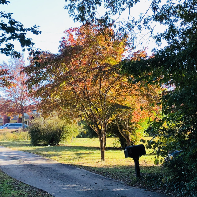 """Southern Autumn"" stock image"