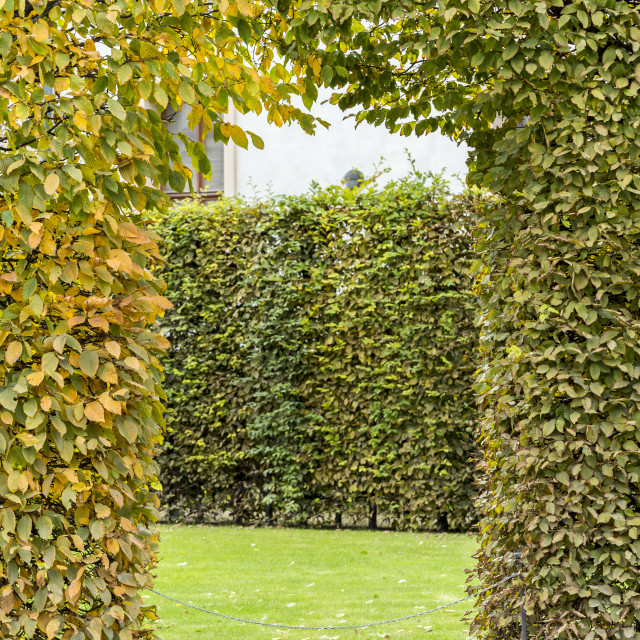 """Green maze entrance"" stock image"