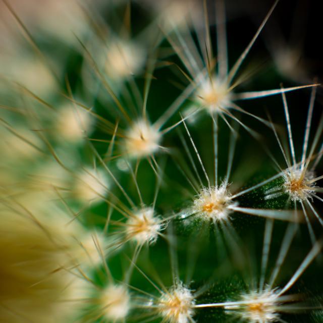 """Golden Barrel Cactus Spines"" stock image"