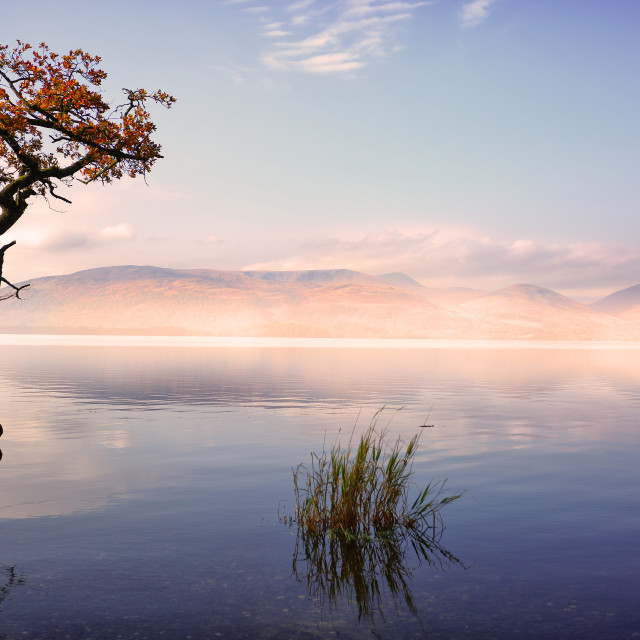 """Milarochy Bay Tree Scotland"" stock image"
