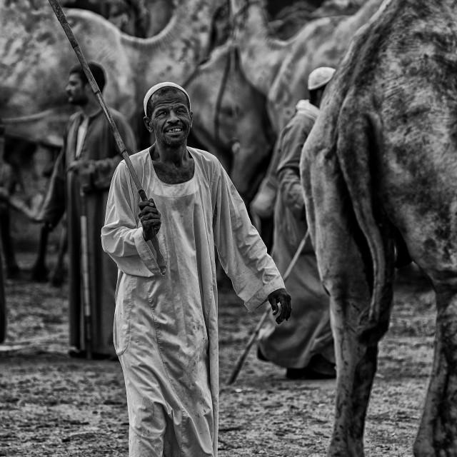 """Camel trader"" stock image"