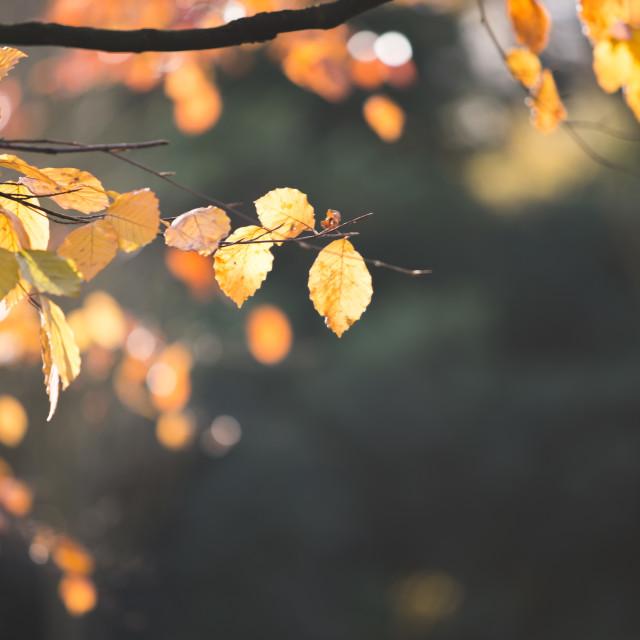 """""""Backlit leaf"""" stock image"""