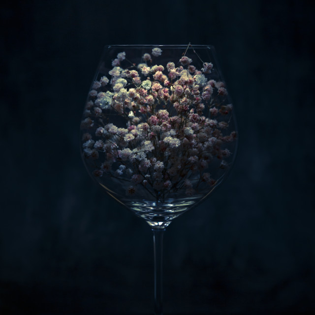 """Baby's Breath in A Wine Glass"" stock image"