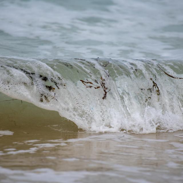 """Seaweed Waves"" stock image"