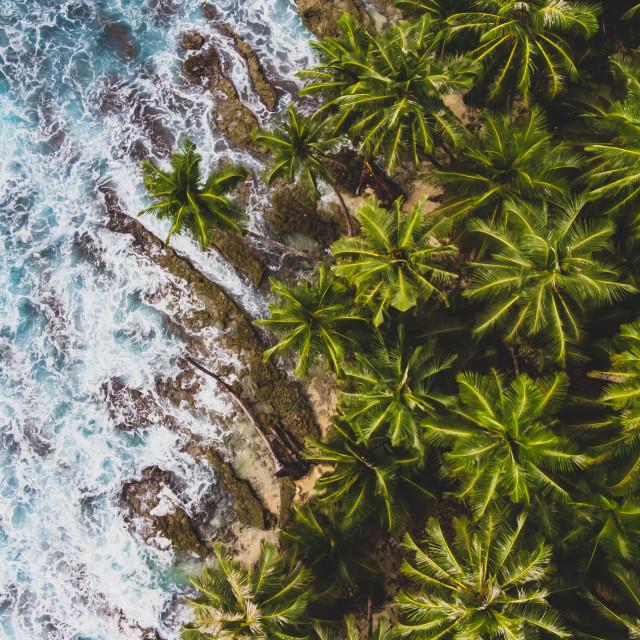"""""""Sea & Palms"""" stock image"""