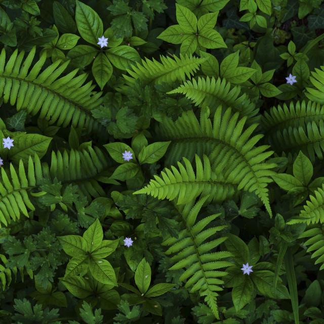 """My Secret Garden --color--"" stock image"