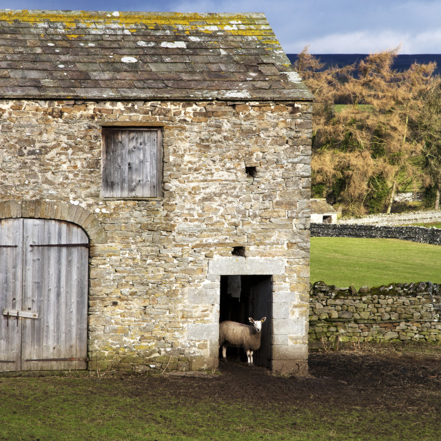 """Field Barn near Aysgarth"" stock image"