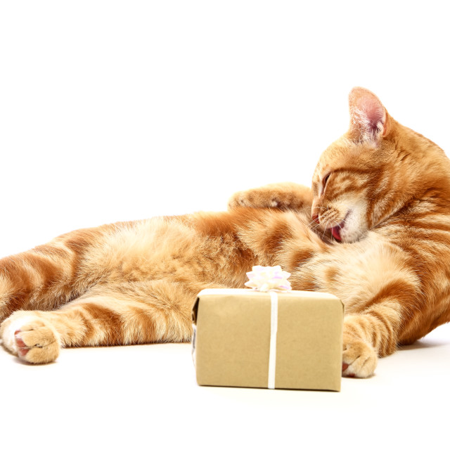 """""""Mackerel tabby kitten washing at the side of a christmas present isolated on a white background"""" stock image"""