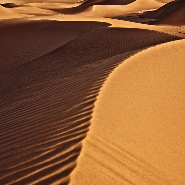 """Sahara Desert Dawn #01"" stock image"