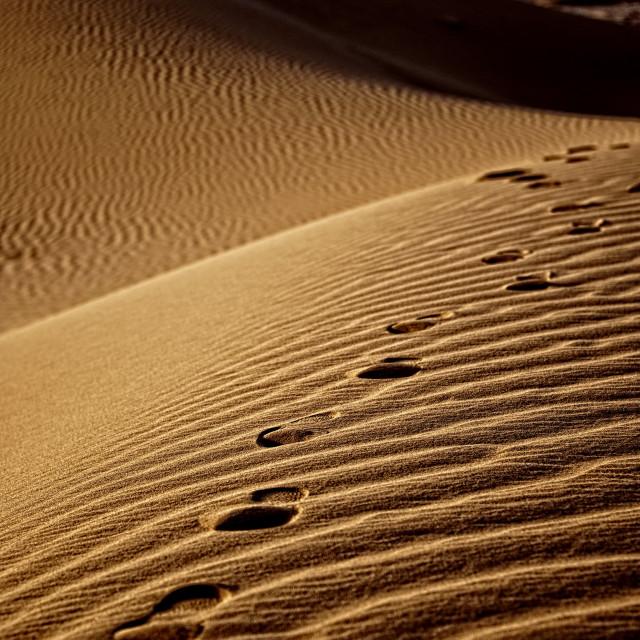 """Footprints in the sand 02 - Sahara Desert"" stock image"