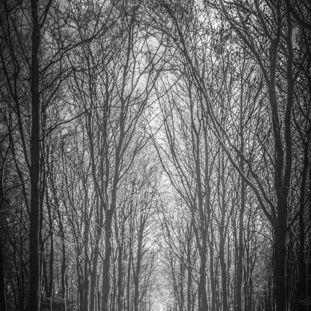"""An avenue of trees"" stock image"