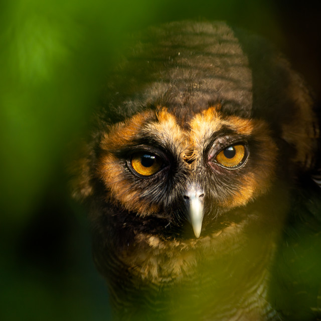 """""""The Owls"""" stock image"""