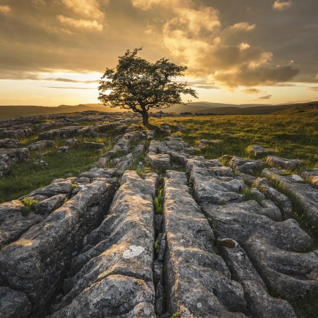 """Winskill Stones lone tree at sunset"" stock image"