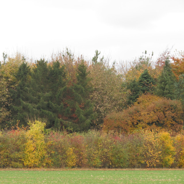 """Oxfordshire Autumn"" stock image"