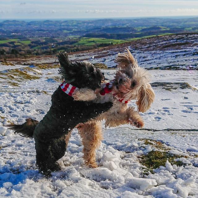 """Snow Fight"" stock image"