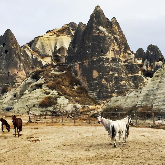 """Horses among rocks of Cappadocia in Turkey"" stock image"