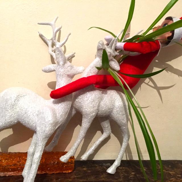 """Elf on a shelf"" stock image"