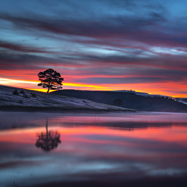 """""""Lonely pine tree reflection on the lake at dawn with fog and fanciful sky"""" stock image"""