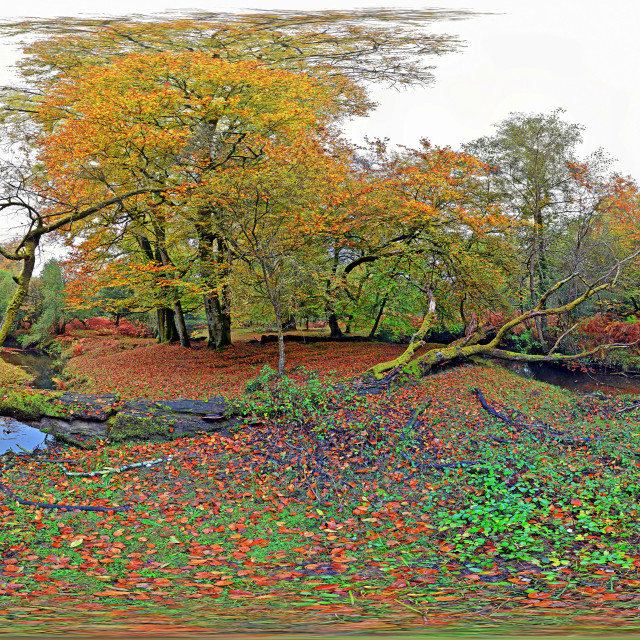 """""""New Forest Stream in Autumn (Equirectangular 360vr)"""" stock image"""