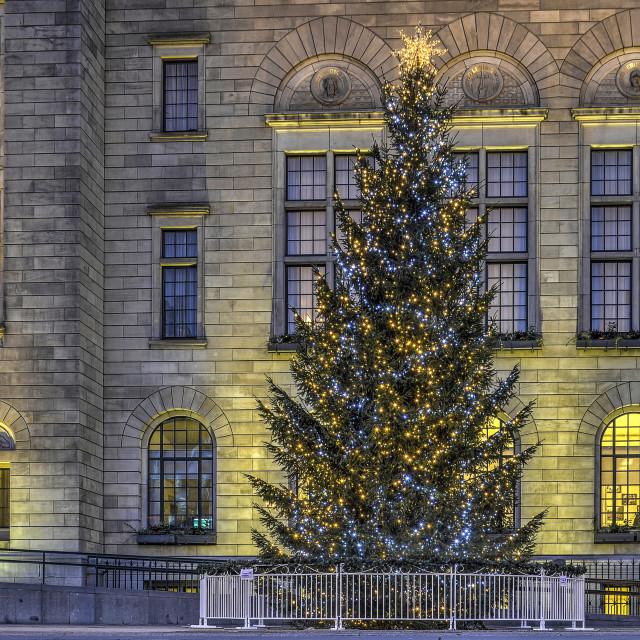 """""""Christmas tree and city hall"""" stock image"""