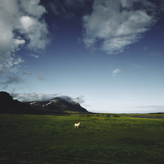 """""""A lone horse in the landscape"""" stock image"""