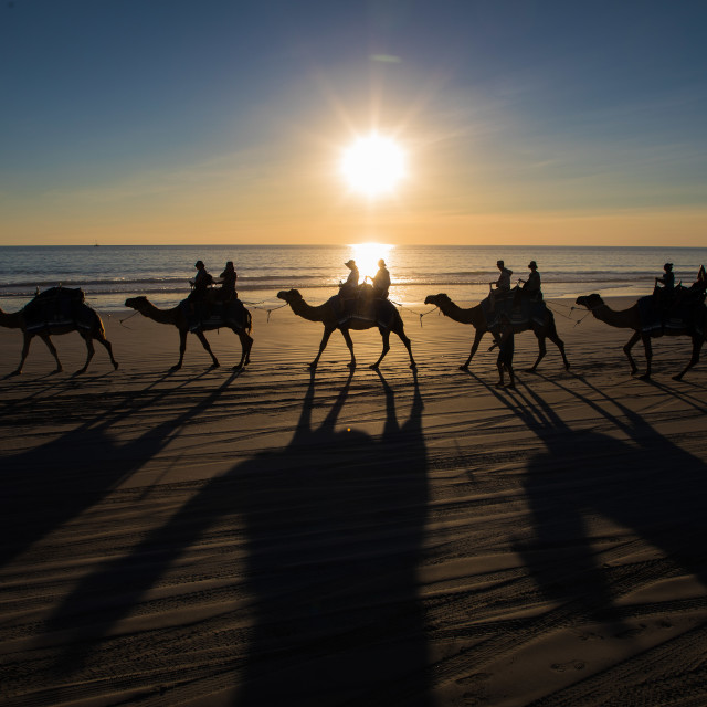 """Cable Beach, Broome, Western Australia, Camels at sunset"" stock image"