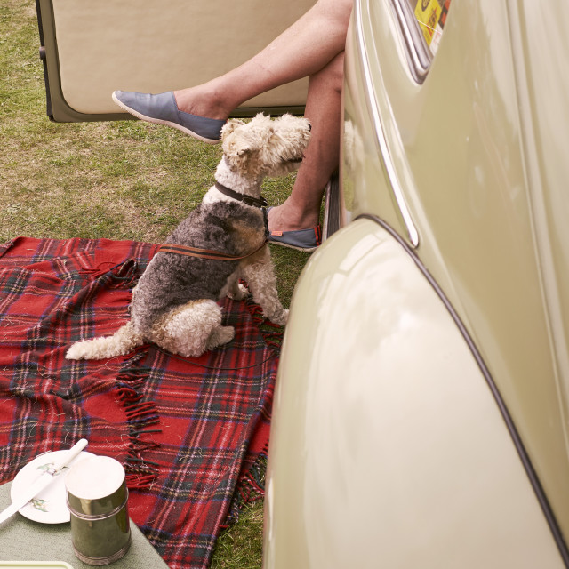 """""""A vintage picnic with the dog at a classic car show."""" stock image"""