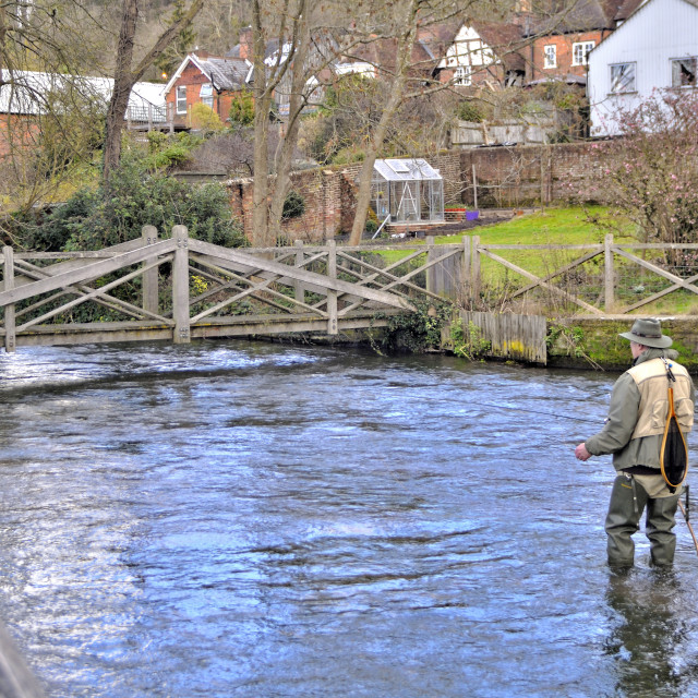 """Man fly fishing in river Itchen."" stock image"