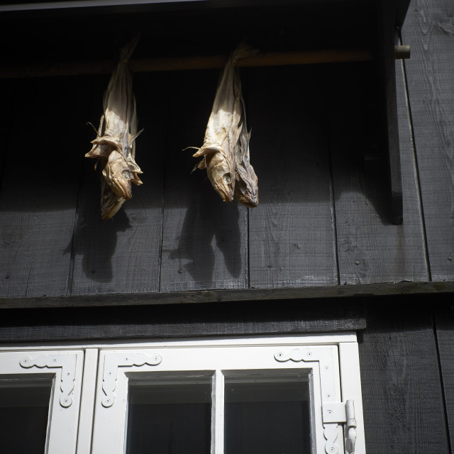 """""""Dried fish hanging outside a Faroese timbered house."""" stock image"""
