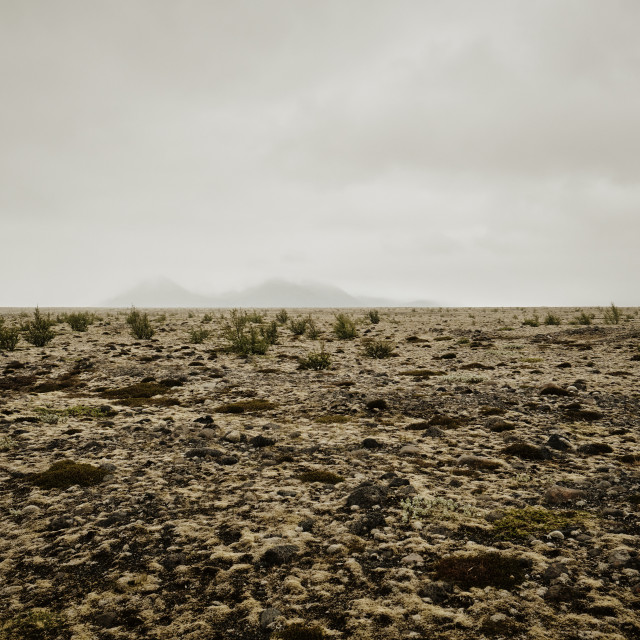 """""""The empty moss covered volcanic landscape of Iceland."""" stock image"""