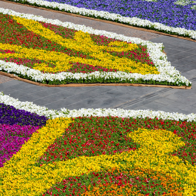 """""""Flowers in Valletta Malta"""" stock image"""