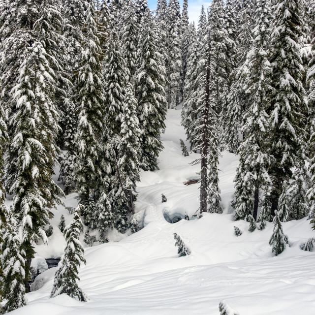 """Snow Covered Landscape on Mt. Rainier"" stock image"