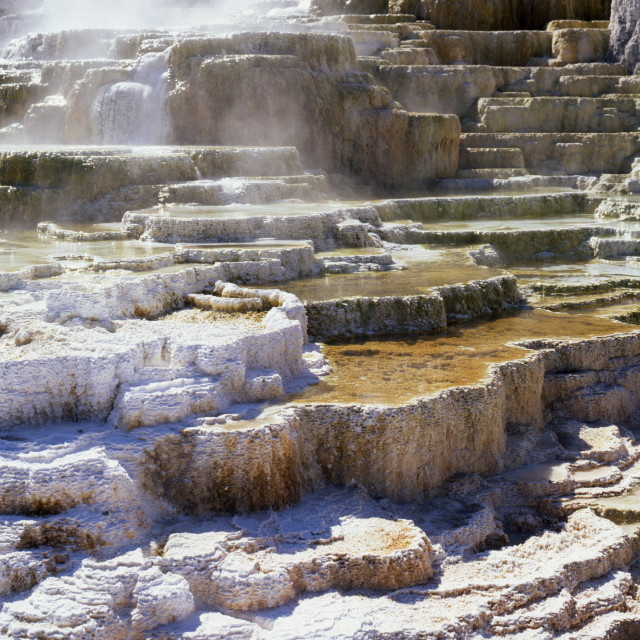 """""""Canary Spring Mammoth Hot Springs Yellowstone National Park"""" stock image"""