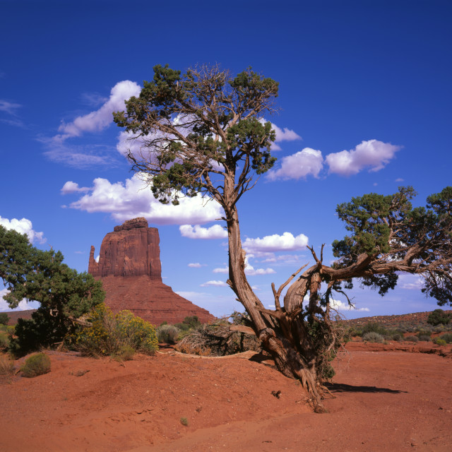 """Mitten Butte and Tree in Monument Valley Arizona"" stock image"