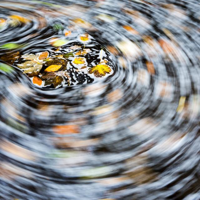 """""""Autumn swirl"""" stock image"""