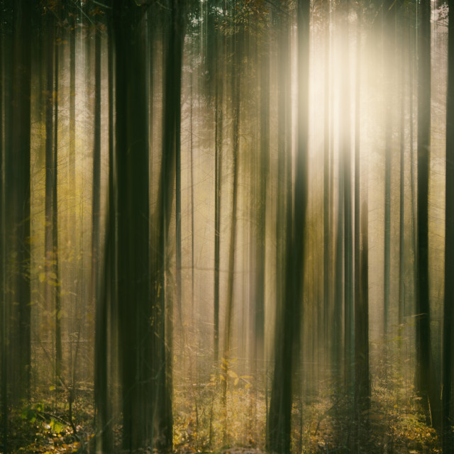 """Forest Sunlight"" stock image"