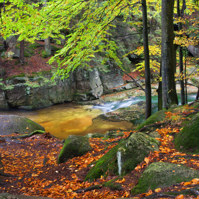 """""""Stream in Autumn Forest in Poland"""" stock image"""
