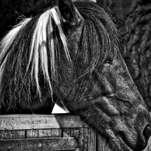 """""""Horse in the Stables"""" stock image"""